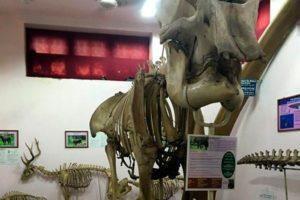 Фото экспонатов музея Нейпир